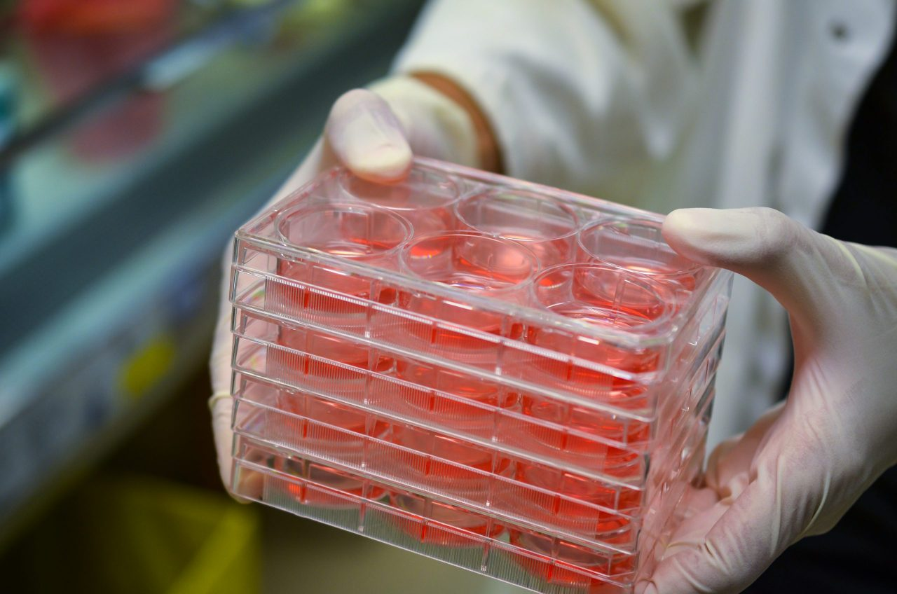 cell-culture-plates-in-research-laboratory-2021-04-05-01-12-51-utc-scaled-1280x848.jpg